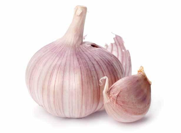 Garlic head detail isolated on white background. Shutterstock 20004520